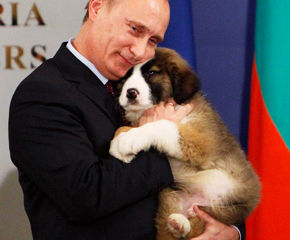 putin-dog-290-290-240